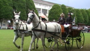 At the Dublin Horse Show