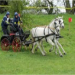 Beauty & Bibi - driving through an obstcle at a horse driving trials competition