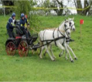 Beauty & Bibi - Horse driving trials competition