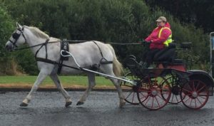 Taking a carriage driving lesson