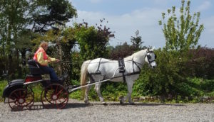 Carriage Driving Lesson