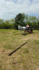 Carriage driving lesson - Beauty put to competition vehicle