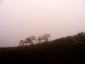 Beauty & Bibi - in the mists of Howth