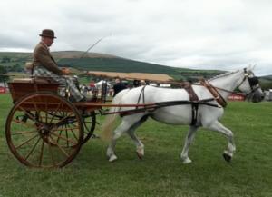Norfolk Cart